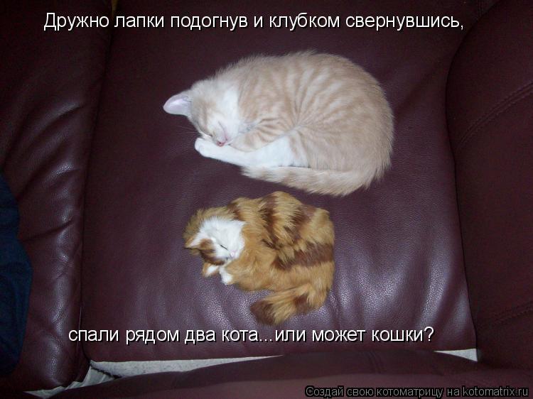 Котоматрица: Дружно лапки подогнув и клубком свернувшись, спали рядом два кота...или может кошки?