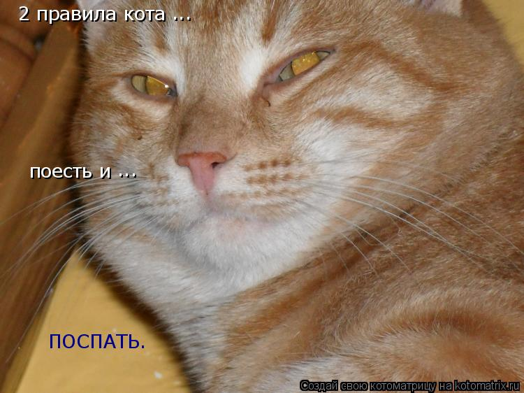 Котоматрица: 2 правила кота поесть и ... ... ПОСПАТЬ.