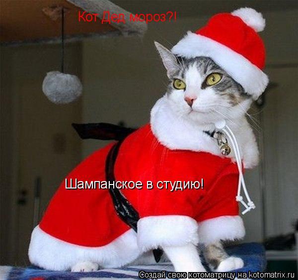 Котоматрица: Кот Дед мороз?! Шампанское в студию!