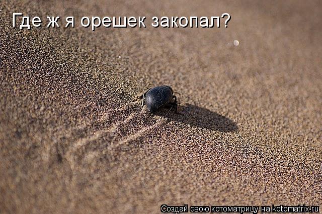 Котоматрица: Где ж я орешек закопал?