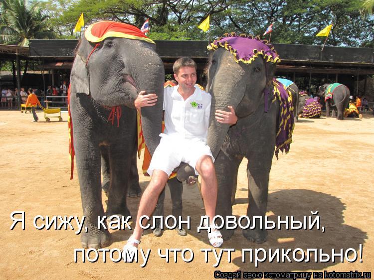 Котоматрица: Я сижу, как слон довольный, потому что тут прикольно!