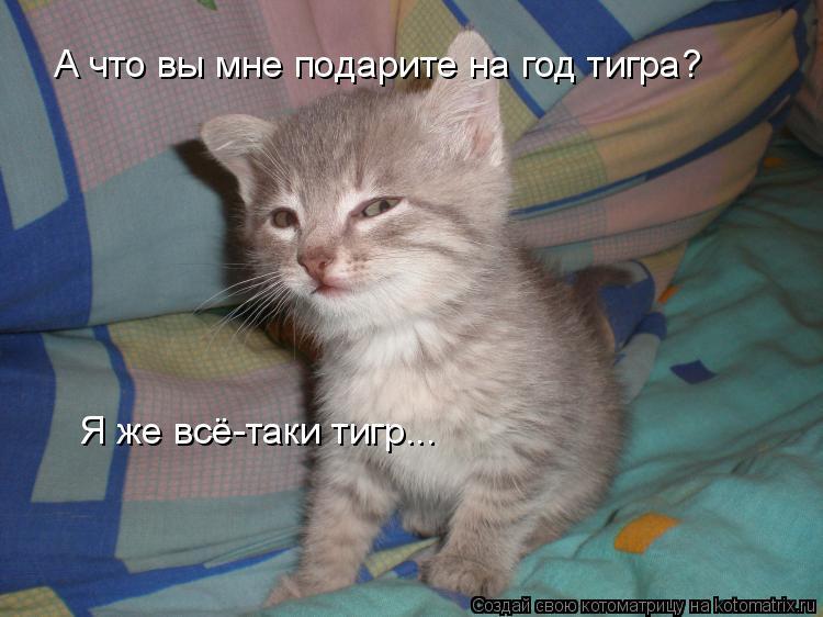 Котоматрица: А что вы мне подарите на год тигра? Я же всё-таки тигр...