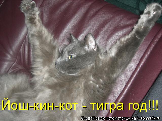 Котоматрица: Йош-кин-кот - тигра год!!!