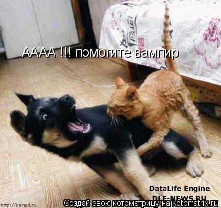 Котоматрица: АААА !!! помогите вампир