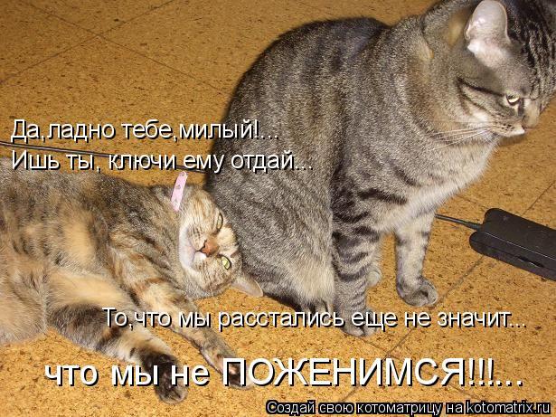 Котоматрица: Да,ладно тебе,милый!... То,что мы расстались еще не значит... что мы не ПОЖЕНИМСЯ!!!... Ишь ты, ключи ему отдай...