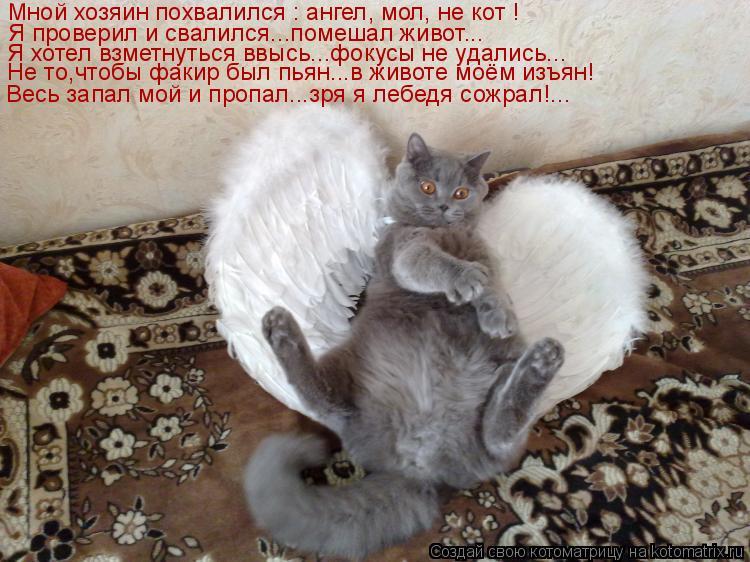 Котоматрица: Мной хозяин похвалился : ангел, мол, не кот ! Я проверил и свалился...помешал живот... Я хотел взметнуться ввысь...фокусы не удались... Не то,чтоб