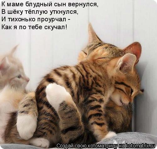 Котоматрица: К маме блудный сын вернулся, В шёку тёплую уткнулся, И тихонько проурчал - Как я по тебе скучал!