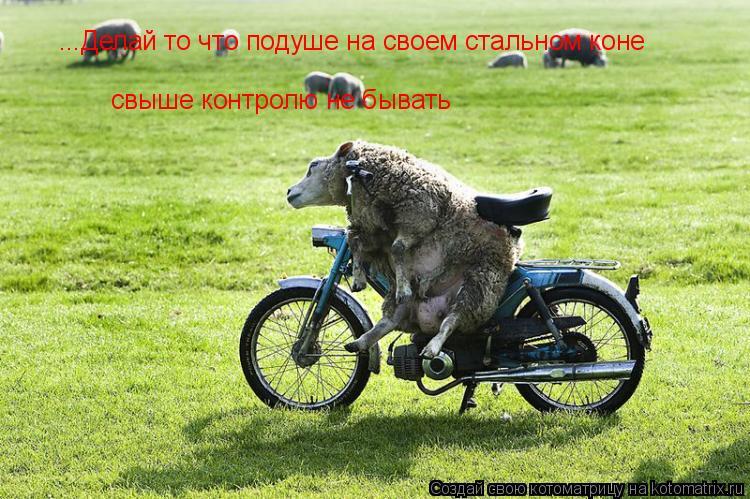 Котоматрица: ...Делай то что подуше на своем стальном коне  свыше контролю не бывать