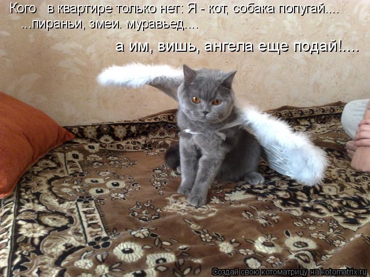Котоматрица: Кого   в квартире только нет: Я - кот, собака попугай....  ...пираньи, змеи. муравьед....  а им, вишь, ангела еще подай!....
