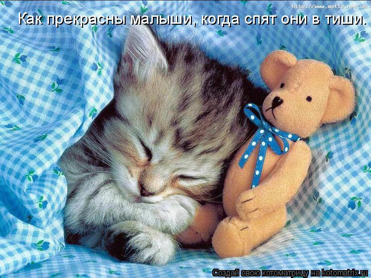 Котоматрица: Как прекрасны малыши, когда спят они в тиши.
