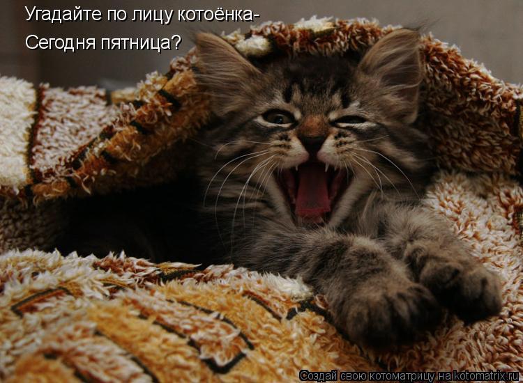 Котоматрица: Угадайте по лицу котоёнка- Угадайте по лицу котоёнка- Сегодня пятница? Сегодня пятница? или