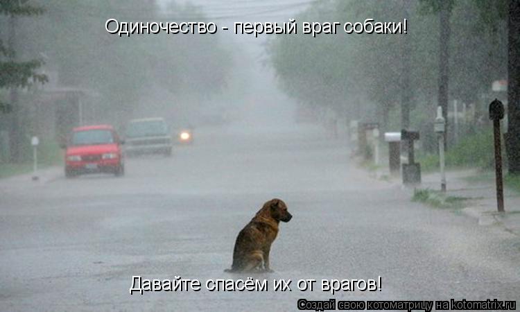 Котоматрица: Одиночество - первый враг собаки! Давайте спасём их от врагов!