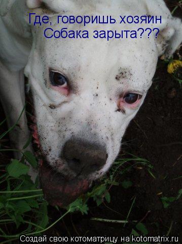 Котоматрица: Где, говоришь хозяин Собака зарыта???