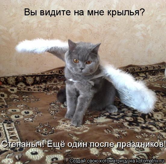 Котоматрица: Вы видите на мне крылья? Степаныч! Ещё один после праздников!