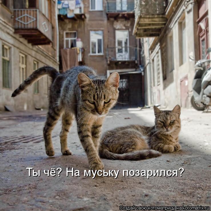 Котоматрица: Ты чё? На муську позарился?