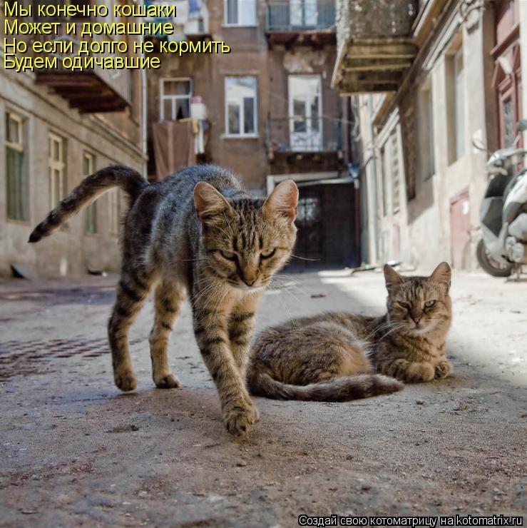 Котоматрица: Мы конечно кошаки Может и домашние Но если долго не кормить Будем одичавшие