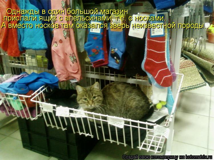 Котоматрица: Однажды в один большой магазин  прислали ящик с апельсинами, т.е. с носками. А вместо носков там оказался зверь неизвестной породы.