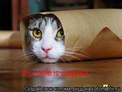 Котоматрица: my name is шаурма