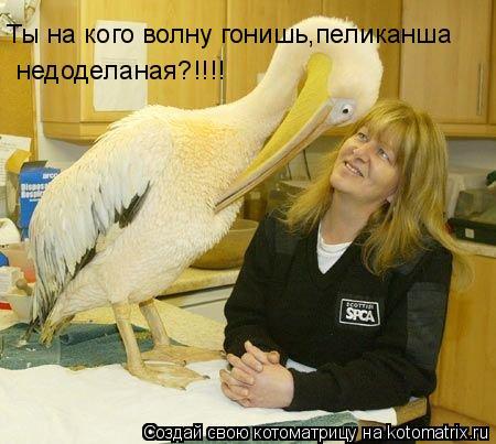 Котоматрица: Ты на кого волну гонишь,пеликанша недоделаная?!!!!