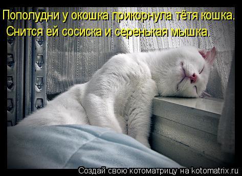 Котоматрица: Пополудни у окошка прикорнула тётя кошка. Снится ей сосиска и серенькая мышка.