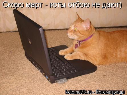 Котоматрица: Скоро март - коты отбою не дают)