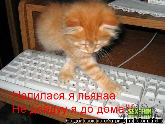 Котоматрица: Не дойдуу я до дома!!! Напилася я пьянаа