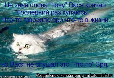 """Котоматрица: Не зная слова """"тону"""" Вася кричал """"последний раз купаюсь""""... Что-то говорило про что-то в жизни но Вася не слушал это """"что-то"""".Зря."""