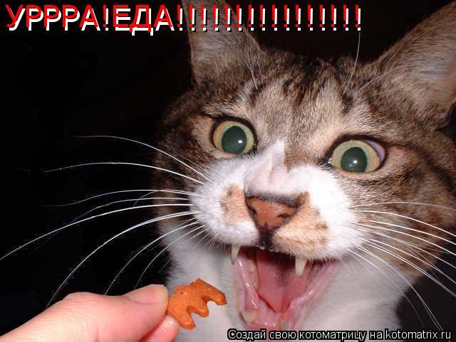 Котоматрица: УРРРА!ЕДА!!!!!!!!!!!!!!!! УРРРА!ЕДА!!!!!!!!!!!!!!!!