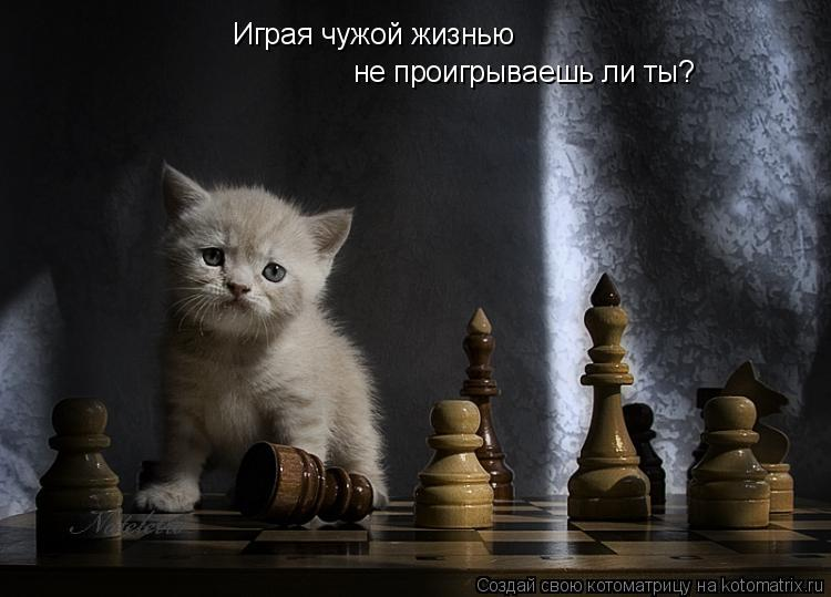 Котоматрица: не проигрываешь ли ты? Играя чужой жизнью