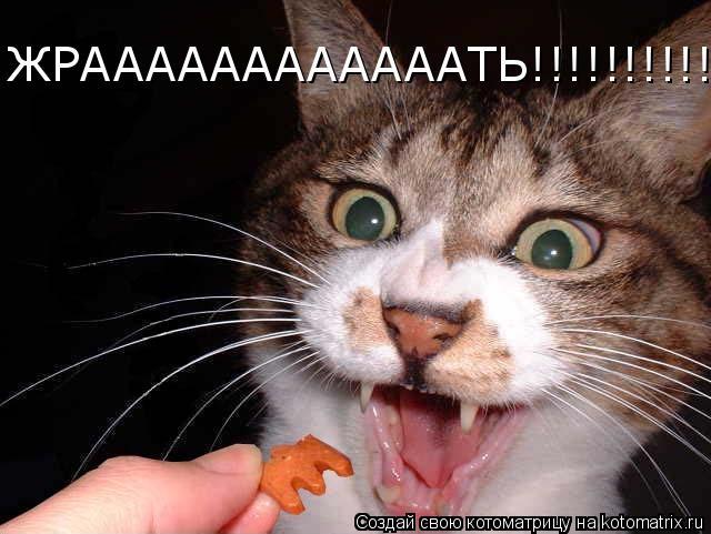 Котоматрица: ЖРААААААААААААТЬ!!!!!!!!!!!!!!!!!