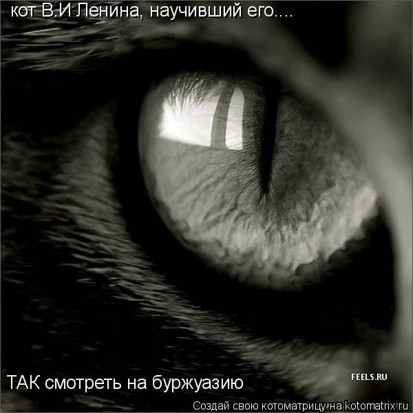Котоматрица: кот В.И Ленина, научивший его.... ТАК смотреть на буржуазию