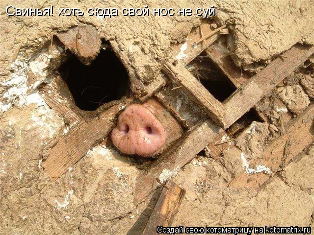 Котоматрица: Свинья! хоть сюда свой нос не суй