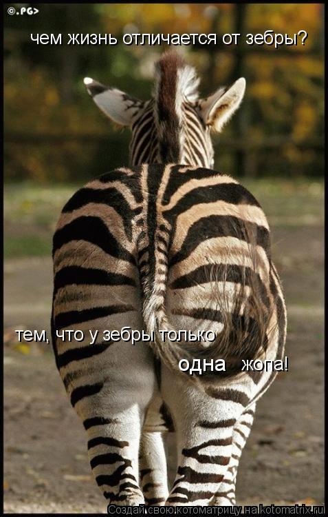 Котоматрица: чем жизнь отличается от зебры? тем, что у зебры только одна жопа!