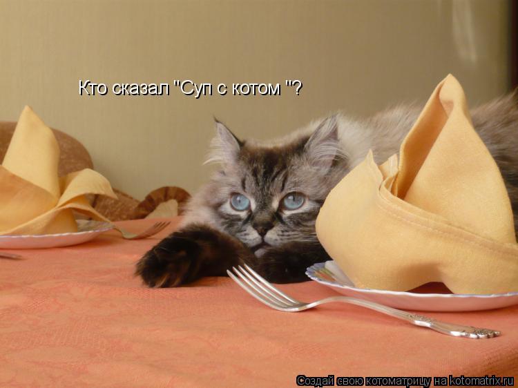 "Котоматрица: Кто сказал ""Суп с котом ""?"