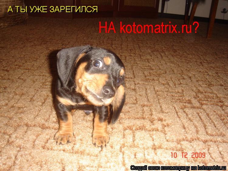 Котоматрица: А ТЫ УЖЕ ЗАРЕГИЛСЯ НА kotomatrix.ru?