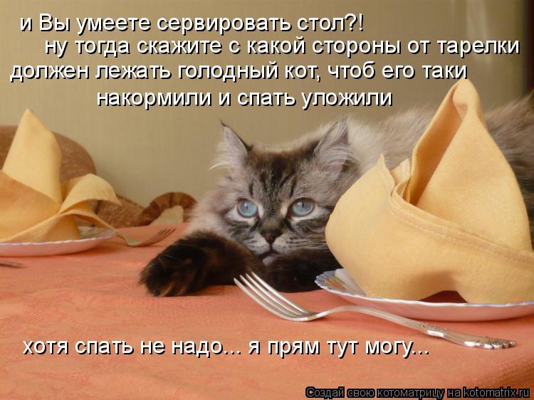 Котоматрица: и Вы умеете сервировать стол?! ну тогда скажите с какой стороны от тарелки должен лежать голодный кот, чтоб его таки накормили и спать уложи