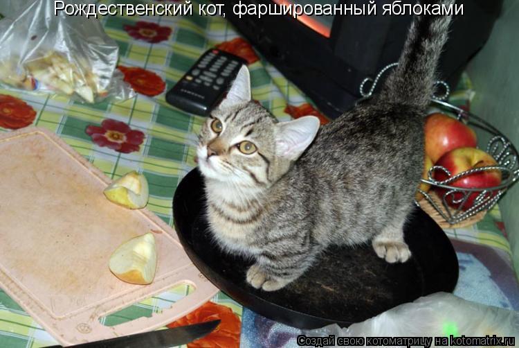 Котоматрица: Рождественский кот, фаршированный яблоками