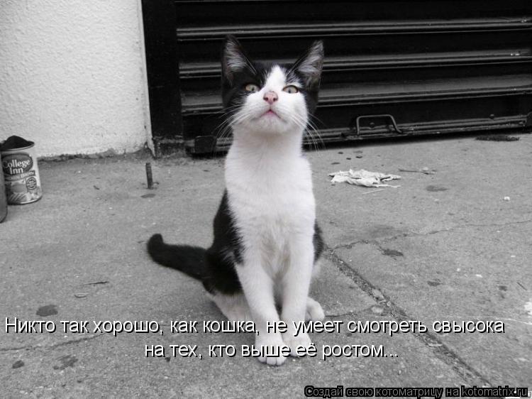 Котоматрица: Никто так хорошо, как кошка, не умеет смотреть свысока на тех, кто выше её ростом...