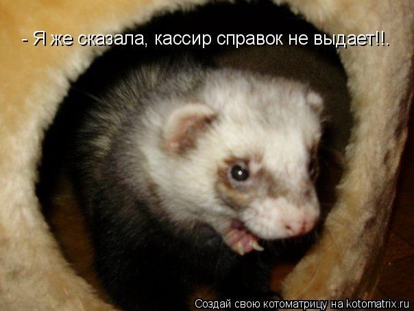 Котоматрица: - Я же сказала, кассир справок не выдает!!.