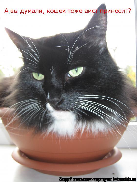 Котоматрица: А вы думали, кошек тоже аист приносит?