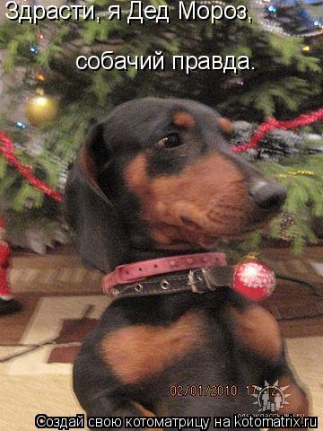 Котоматрица: Здрасти, я Дед Мороз, собачий правда.