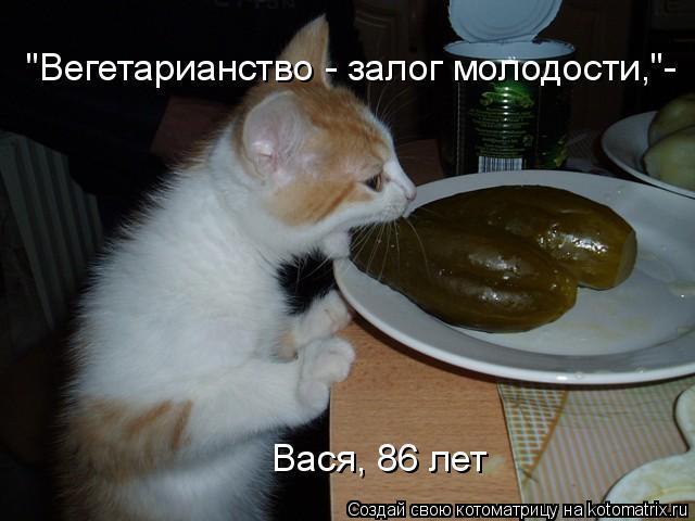 """Котоматрица: """"Вегетарианство - залог молодости,""""- Вася, 86 лет"""
