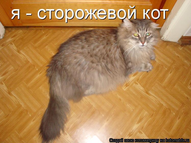 Котоматрица: я - сторожевой кот