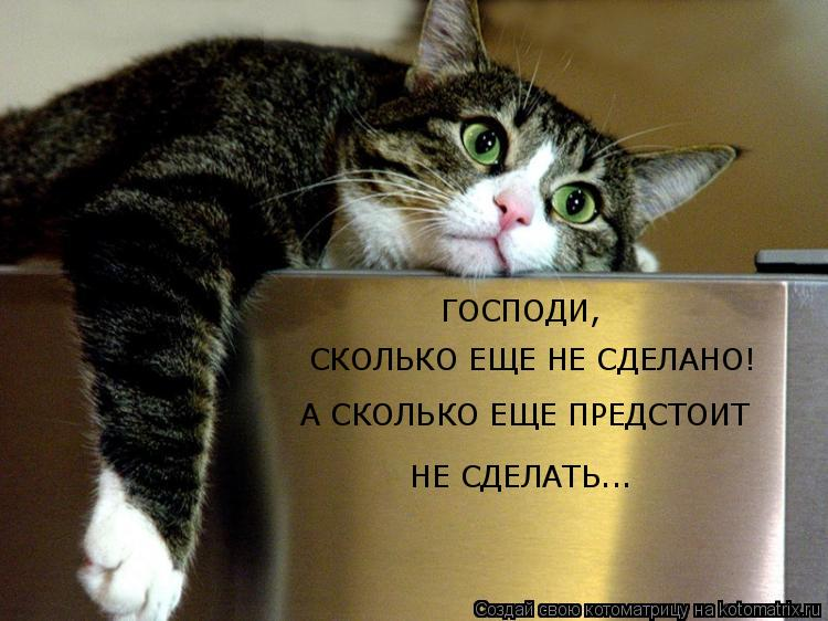Котоматрица: ГОСПОДИ,  СКОЛЬКО ЕЩЕ НЕ СДЕЛАНО! А СКОЛЬКО ЕЩЕ ПРЕДСТОИТ  НЕ СДЕЛАТЬ...