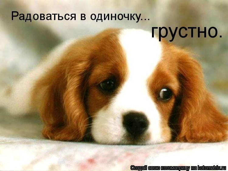 Котоматрица: Радоваться в одиночку... грустно.