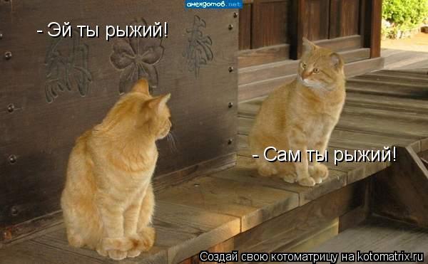 Котоматрица: - Эй ты рыжий! - Сам ты рыжий!