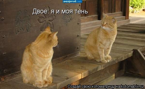 Котоматрица: Двое: я и моя тень