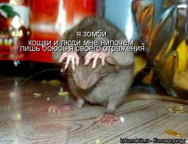 Котоматрица: я зомби кощки и люди мне нипочём лишь боюсь я своего отражения