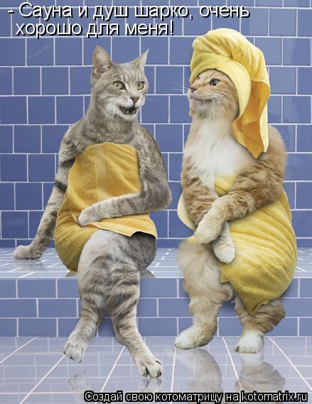 Котоматрица: - Сауна и душ шарко, очень хорошо для меня!