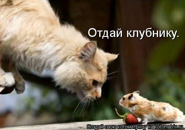 Котоматрица: Отдай клубнику.